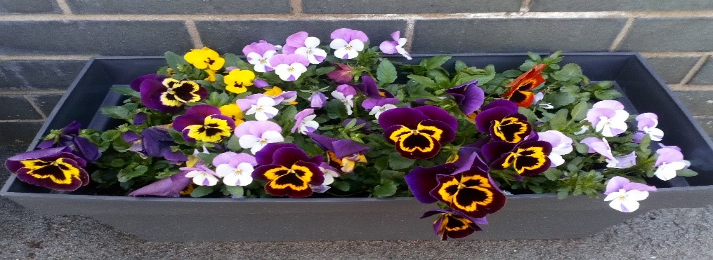 Flower planters, using BGU donation